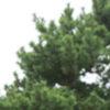 ヘンプ、大麻草の定義とイメージ