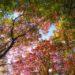 [長期分析]  ビッグ・ピクチャー:時間的な「木を見て森を見ず」に陥らないために
